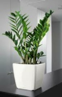 office-plant-white-pot