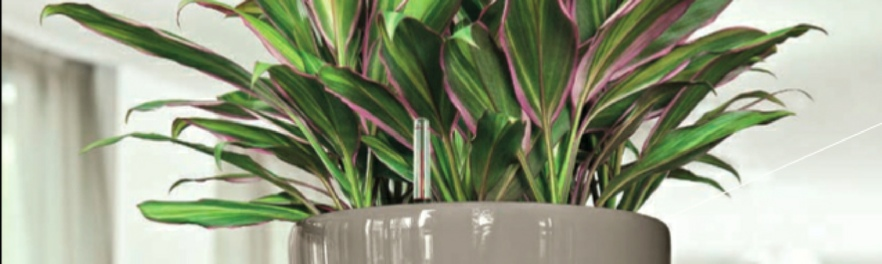 office-plant-tricolor-cordyline